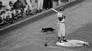 Stray black cat dances around Cubs Ron Santo at Shea Stadium in 1969