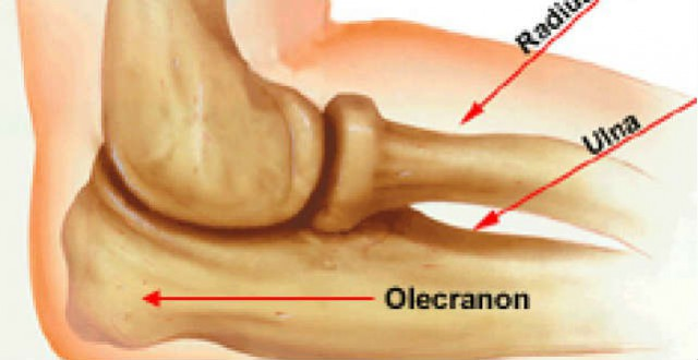 olecranon-640-330